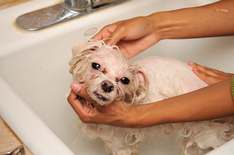Tips on bathing your dog.