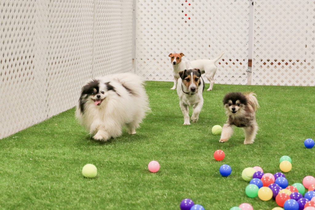Things to consider in choosing a dog's boarding home.